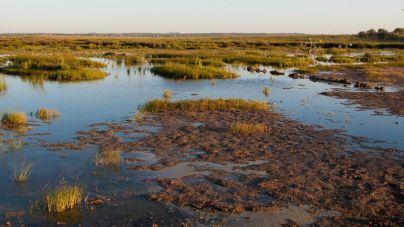 El GOB alerta del empeoramiento ambiental de la Albufera