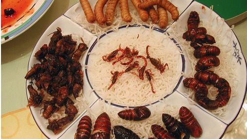 Los insectos aportan tanto hierro a la dieta como la carne de ternera