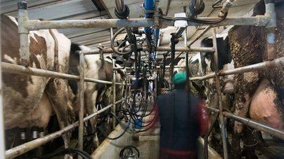 Los productores baleares de leche consiguen vender a un precio superior a la media
