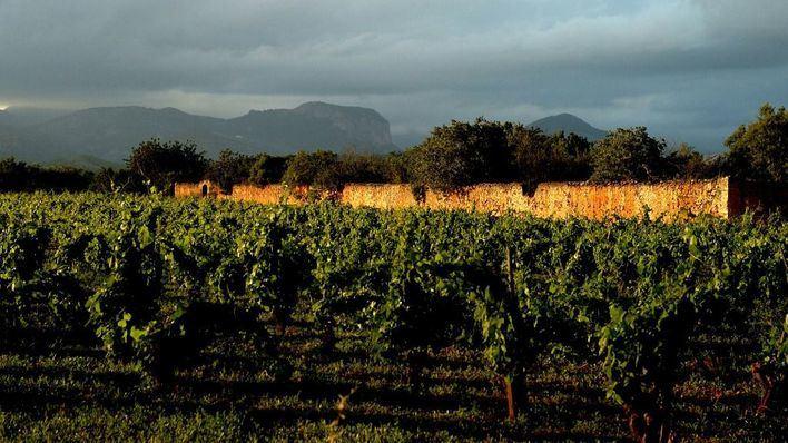 Los bodegueros de Balears se oponen a que Pla i Llevant lleve la regulación del Vi de la Terra