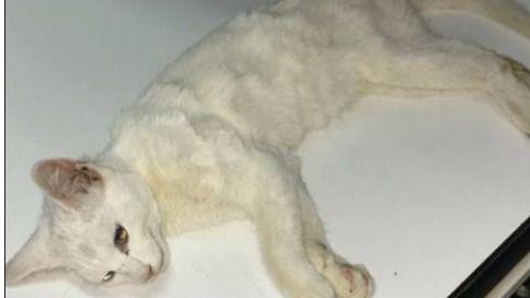 Indignación por la muerte de gatos con disparos de balines en S'Arenal