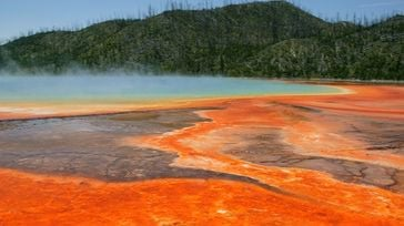 Muere desintegrado al bañarse en aguas termales ácidas de Yellowstone
