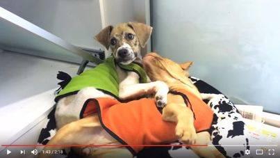 El perro rebozado con pegamento y barro por unos niños se recupera