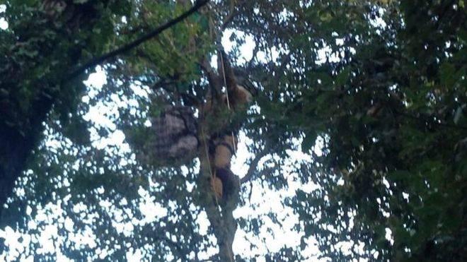 Retirado un nido de la temida avispa asiática en el Coll de Sóller