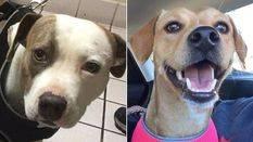Rescatadas dos perras que eran alquiladas para realizar servicios sexuales