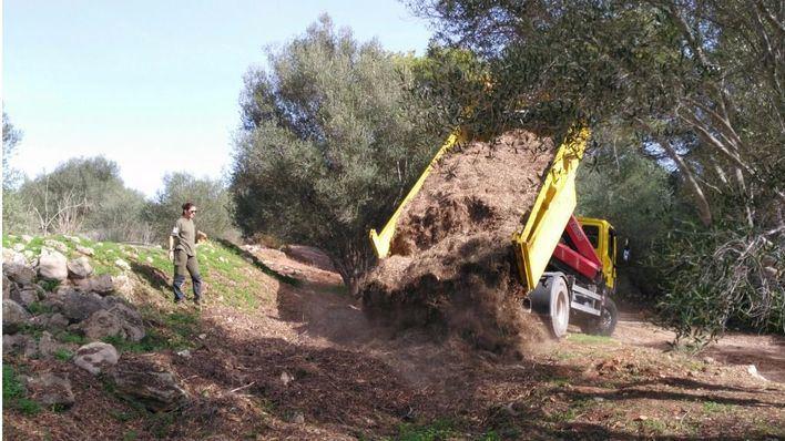 Imagen de las tareas de reforestación