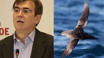 Imagen del senador y del ave