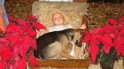 Un cachorro abandonado se refugia del frio en un pesebre navideño