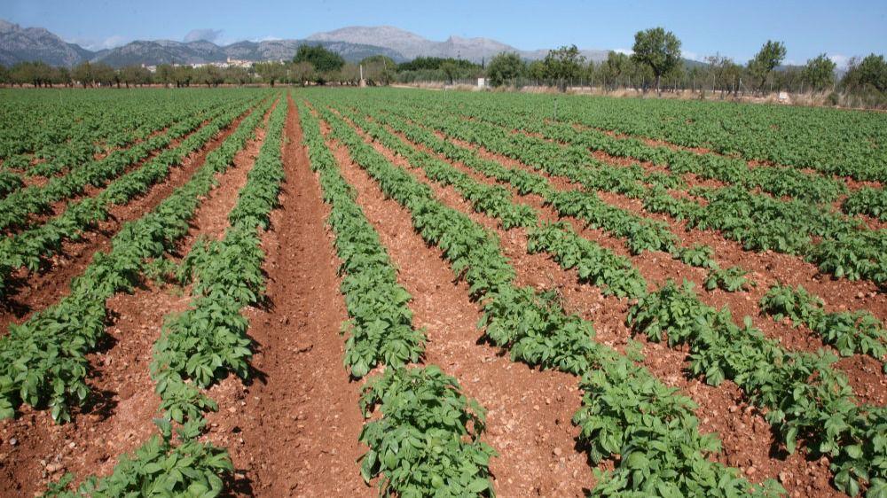 El reparto de las lluvias deja beneficios en el campo for Que son cultivos asociados