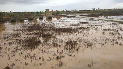 Han resultado afectadas fincas agrícolas del Pla, s'Aranjassa y sa Casa Blanca