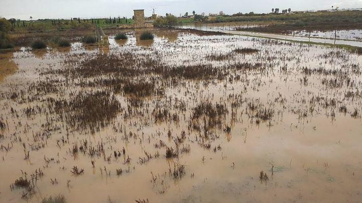 Asaja pide que se compensen los daños de la lluvia