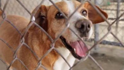 Una broma consigue que decenas de perros sean adoptados