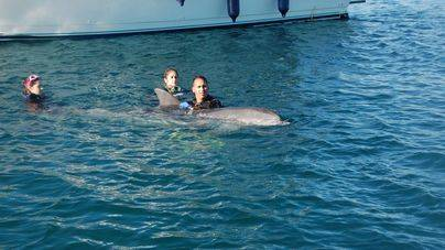 Liberado un delfín en Palma con una red enganchada