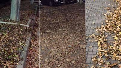 EMAYA deja importantes zonas de Palma cubiertas de hojas