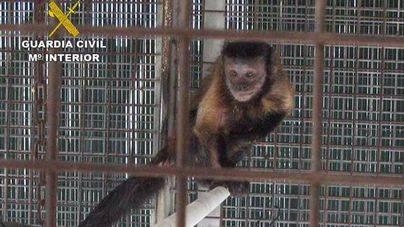 Detectados animales de especies protegidas sin certificado en S'Aranjassa