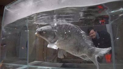 Desata la ira de los internautas al congelar un pez con nitrógeno líquido