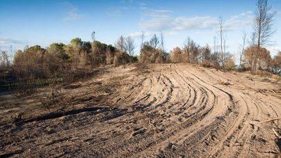 El GOB exige la paralización de las labores forestales en Sa Canova por su fuerte impacto