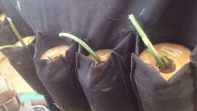 Asesinadas 3 mujeres que iban a inmolarse en un mercado de Nigeria