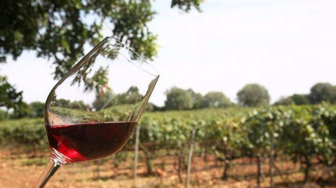 La producción de vino en las islas aumenta un 10%
