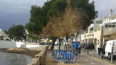 Cort intensifica la inspección de árboles en riesgo de caída tras el temporal