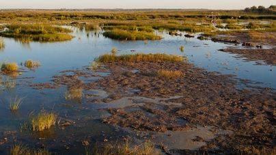 S'Albufera de Mallorca sufre un constante empeoramiento de la calidad del agua