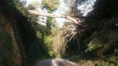 El viento obliga a cerrar un acceso a La Bonanova en Palma y la carretera Sencelles-Pina