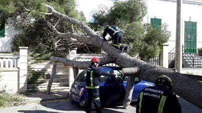 Más de 100 incidentes y 52 árboles caídos por el viento