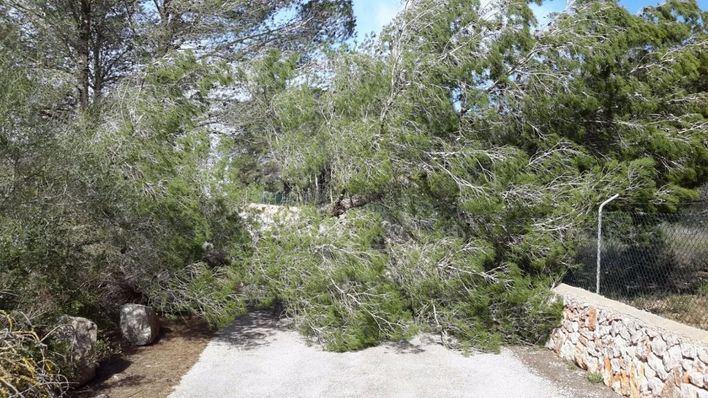 El temporal deja vientos de 134 km/h en Alfàbia, 91 en Sa Pobla y 87 en Portocolom