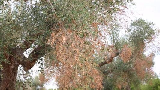 Se prohíbe la llegada de vegetales de Eivissa al resto de Balears