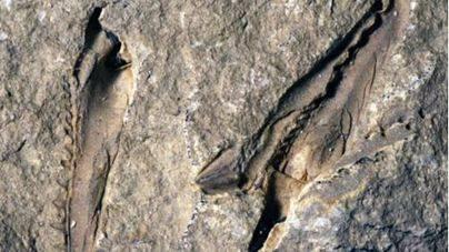 Científicos de Bristol identifican un gusano gigante con mandíbulas