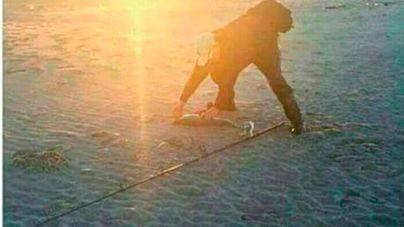 ¿Gorilas en la playa?