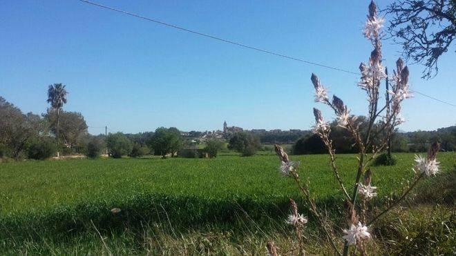 La primavera será más cálida de lo normal en Balears y lloverá