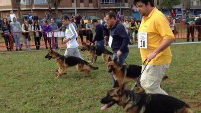 II Certamen Internacional de perros de caza