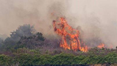 Estado de emergencia en Florida por más de 100 incendios forestales