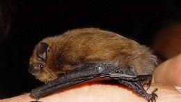El Govern instalará más cajas refugio para murciélagos