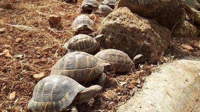 Palma Aquarium y las cofradías de pescadores firman un convenio para proteger tortugas y delfines
