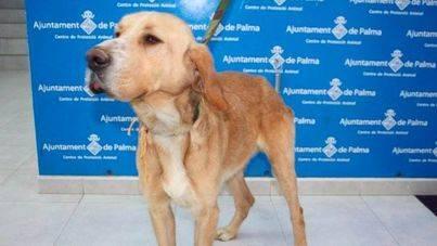 Animanaturalis pide una oficina de protección animal en Palma con los presupuestos participativos