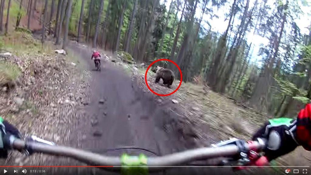 Van con su bici por la montaña y se les cruza un oso pardo