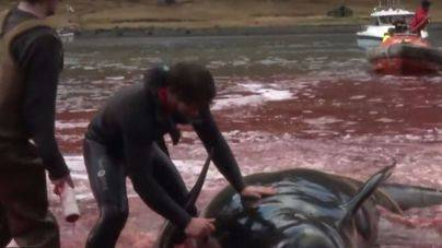 Imagen de la matanza de delfines del año 2013