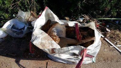 La Guardia Civil investiga la muerte de un ciervo aparecido en un saco