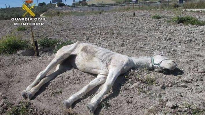 Imputado por abandonar hasta la muerte a una yegua en Sevilla