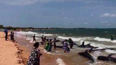 Salvan a una veintena de ballenas encalladas en una playa de Sri Lanka