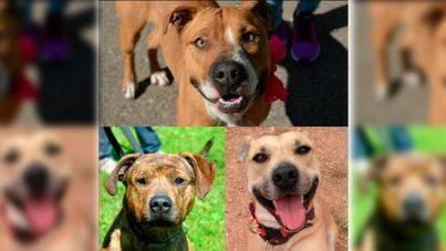 Enfado por el sacrificio de otros 3 perros sanos en Son Reus
