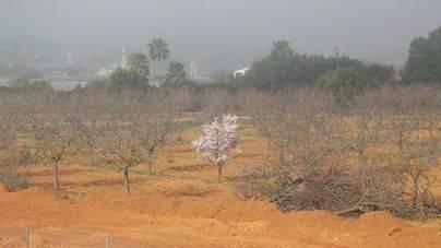 Foto de archivo de la sequía del año pasado en Mallorca