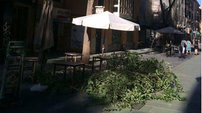 Cae una rama en plena terraza de la calle Oms de Palma