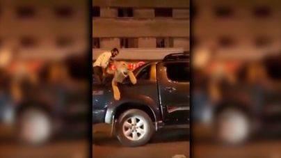 Detenido por llevarse a su leona de paseos en su Jeep