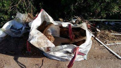 Imagen de uno de los animales en el saco de obras