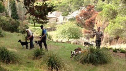 El GOB insta a los ayuntamientos a no permitir la caza en los terrenos de uso común