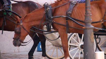 Quejas por la 'explotación' de los caballos de galeras en plena ola de calor