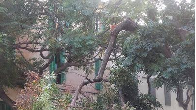 Cae una rama de un árbol en Santa Catalina sin causar desperfectos